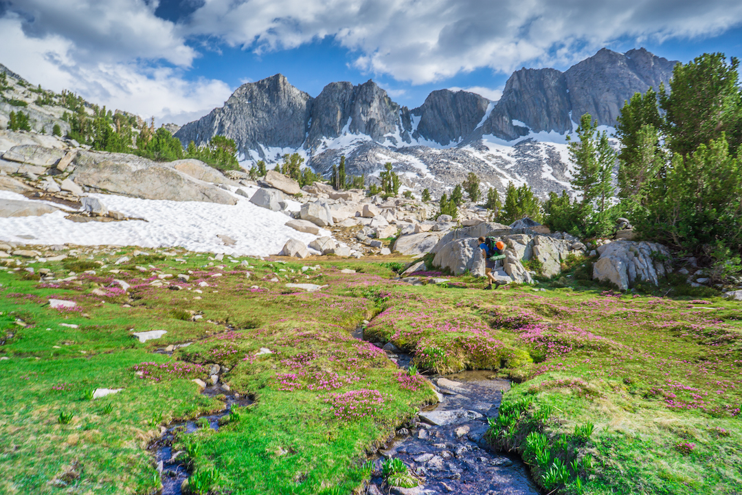 A beautiful meadow on the approach to the northwest face of Mt. Clarence King.